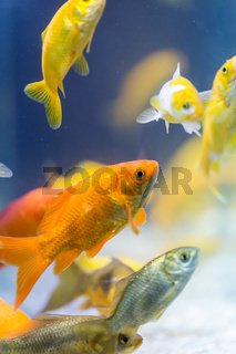 colorful decorative fishes