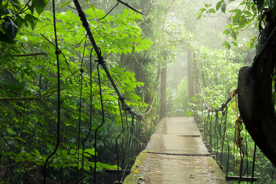 Old suspension bridge in rainforest
