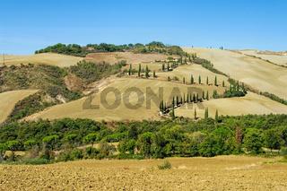 Zypressenkurve im Herbst in der Toskana - cypress curve in fall, Tuscany in Italy