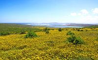 flower saison at West Coast National Park, South Africa