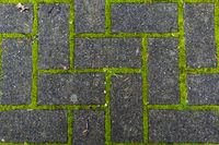 pedestrian tile with moss growing through the joints