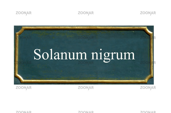shield Solanum nigrum