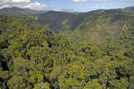 Rainforest in Northern Queensland, Australia