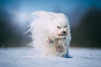 Little dog has a lot of fun in the snow