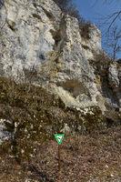 Peregrine falcon nest; swabian alps;