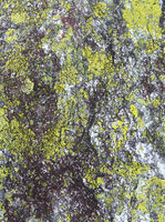 Stone with lichen (background).