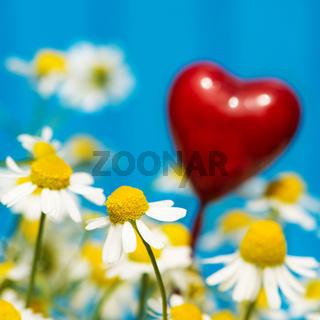 Kamille mit Herz