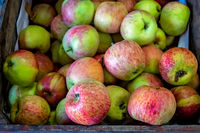 Fresh red and green apples for sale