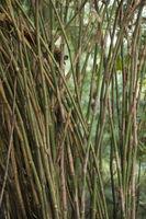 THAILAND ISAN UDON THANI PHU PHRA BAT FOREST