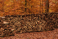 autumn, forest, woodpile,
