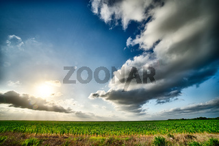 spring farm fields with sunset and clouds in texas