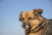 Portrait eines Mischlingshundes