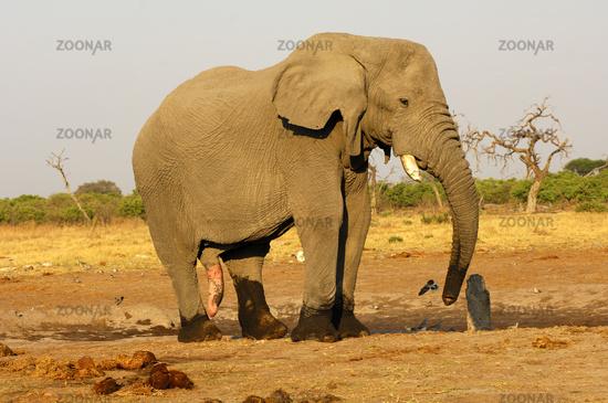 Adult elephant porn list