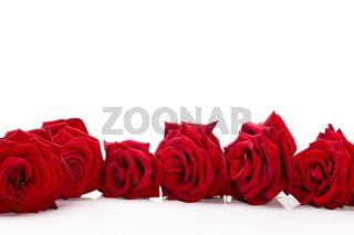Rosen liegen auf weiß wd672