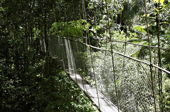 Suspension bridge in Ecoparque de Una, Bahia, Brazil, South America
