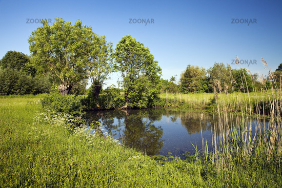 lake in Tiebaum nature reserve, Hamm, Ruhr Area, North Rhine-Westphalia, Germany, Europe