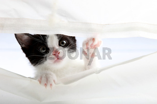 kleines Kätzchen schaust hoch durch ein vorhang