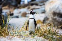 Lively penguin