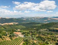 Plantation of vines near Montalcino in Tuscany