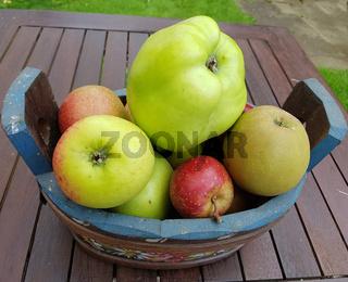 Alte Apfelsorten, verschiedene, Apfel, Malus, domestica