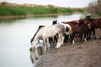Horses at the Watering