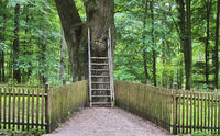 famous Grooms Oak Tree in Eutin, Holstein Switzerland,Schleswig-Holstein,Germany