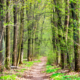 Green spring forest