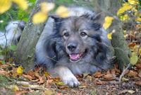 Hund im bunten Laub im Garten
