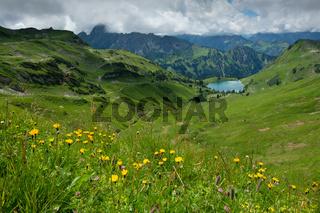 Seealpsee im Allgäu mit Blumenwiese im Sommer