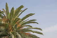 Detail of a powerful palm tree