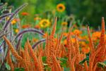 Die Farben der Natur