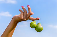 Hand holding two hanging green pears in blue sky