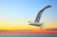 Sunset seascape with flying seagull