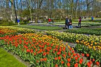 At Keukenhof Flower Gardens, Lisse, Netherlands