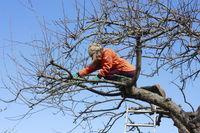 Tree pruning, gardening