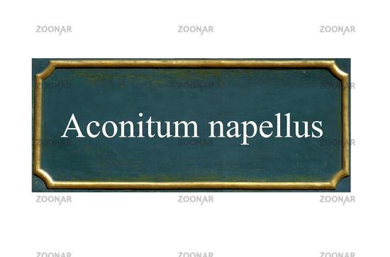 shield  Aconitum napellus