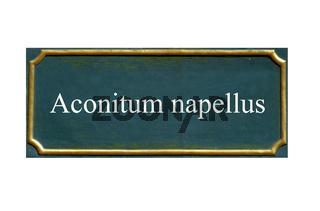 schild Eisenhut,blauer u.a., Sturmhut, echter Aconitum napellus