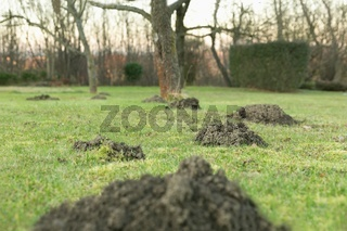 Mole hole in the garden