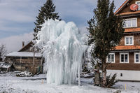 A tree covered with ice