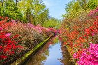 Spring landscape in park Keukenhof, Netherlands