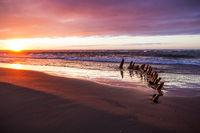 Old shipwreck at a beach near Hirtshals