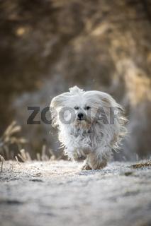 Glücklicher kleiner Hund
