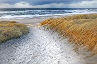 Path through dunes near Kampen, Sylt, Schleswig-Holstein, Germany
