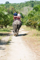 Elephamt riding by tourists in tropical green palms and trees