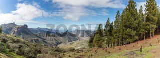 Abholzung von Wald auf Gran Canaria
