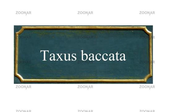 shield Taxus baccata