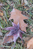 leaves with diamond dust