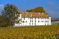 Allaman Castle and vineyard, Chateau d'Allaman, Allaman, Vaud, Switzerland