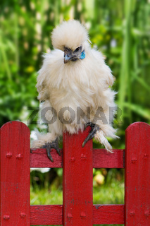Huhn sitzt am Zaun