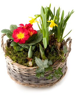 Flechtkorb mit buntem Frühlingsblumen-Mix
